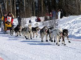 alaska dog sled