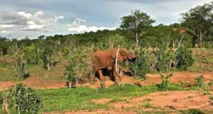 game-drive-elephant