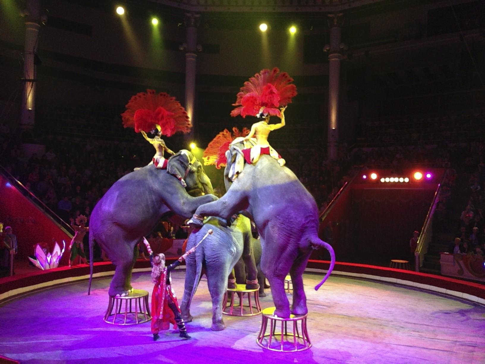 Цирк москвы картинки