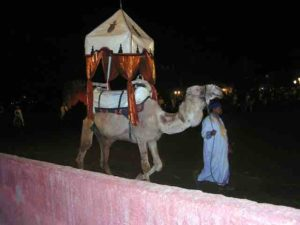 I rode a camel during our most recent visit to Dubai.