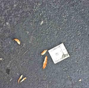 $20 bill on ground