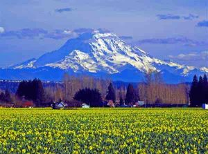 Puyallup, Washington
