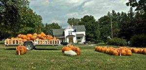 new-york-pumpkins
