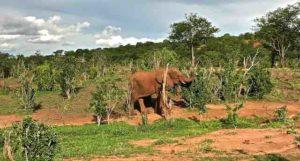 game-drive-elephant
